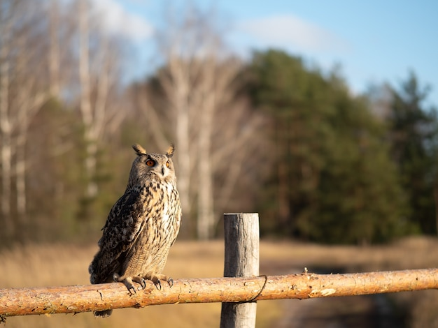 An owl sits on a wooden fence in a field.