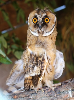 An owl sits in a zoo