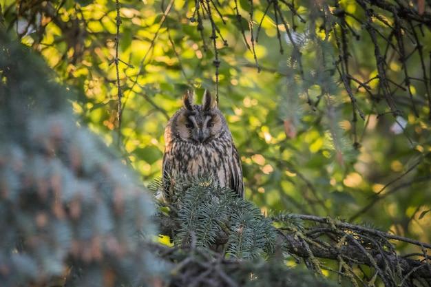 Gufo seduto sul ramo e guardando la fotocamera