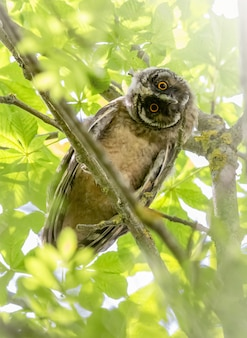 Owl sitting on branch and looking at camera