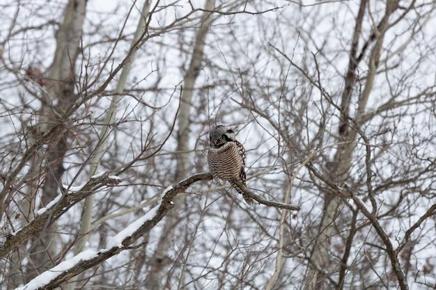 Gufo seduto su un ramo di albero coperto di neve