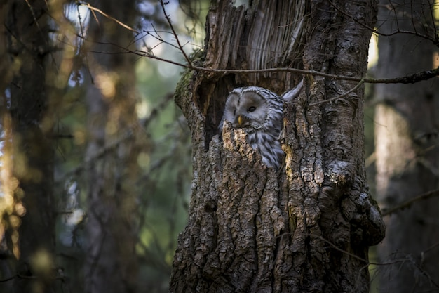Owl sitting inside tree trunk