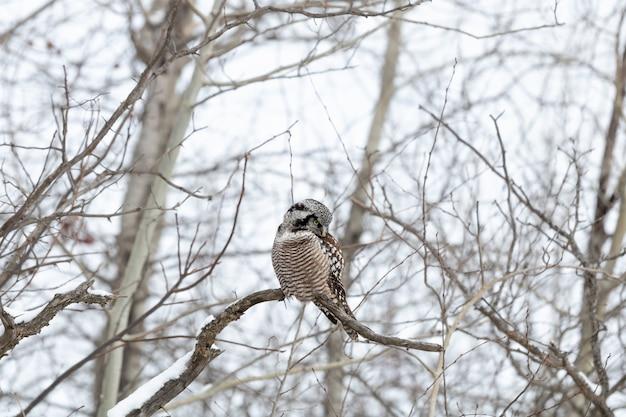 昼間の冬に枝に座っているフクロウ