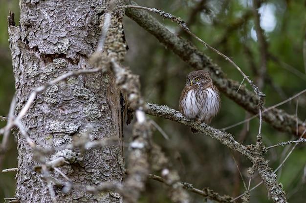 枝に座って、側にいるフクロウ