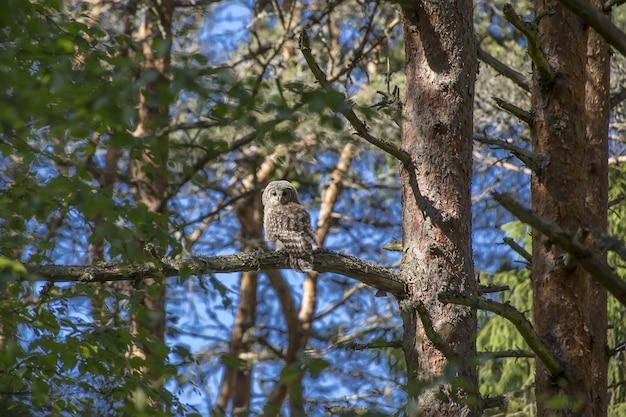 Сова сидит на ветке дерева и смотрит в камеру
