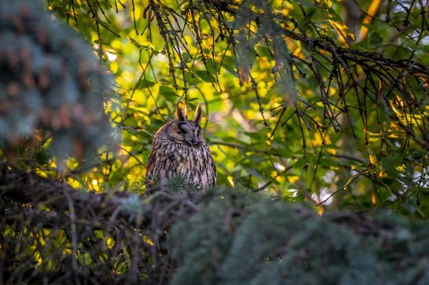 Сова сидит на ветке дерева между листьями