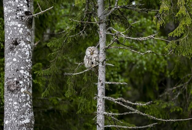 Сова сидит на ветке дерева в лесу