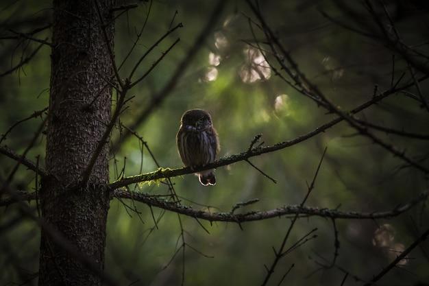 木の幹の上に座って、カメラ目線のフクロウ