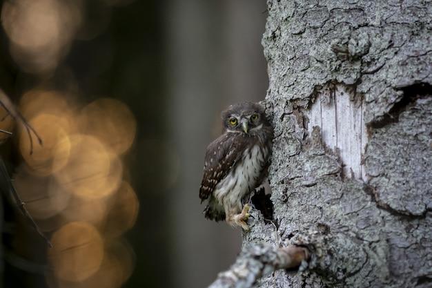 Сова сидит на стволе дерева и смотрит в камеру