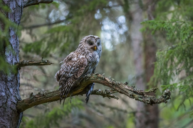 Owl sitting on tree branch in forest