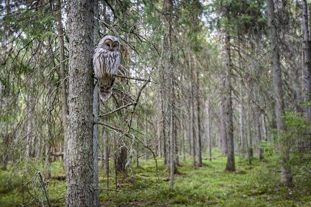 Gufo seduto sul ramo di un albero nella foresta