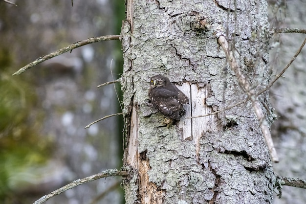 Owl sitting on tree trunk and looking at camera