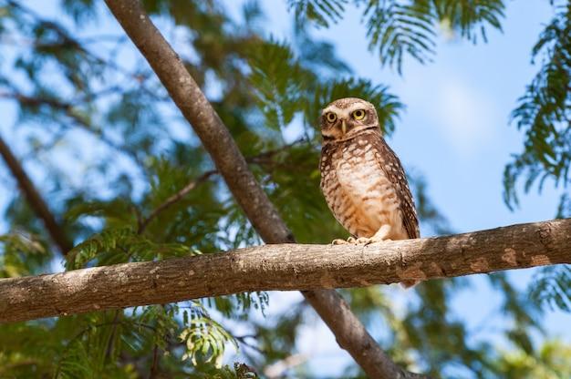 Owl on tree branch, looking Premium Photo