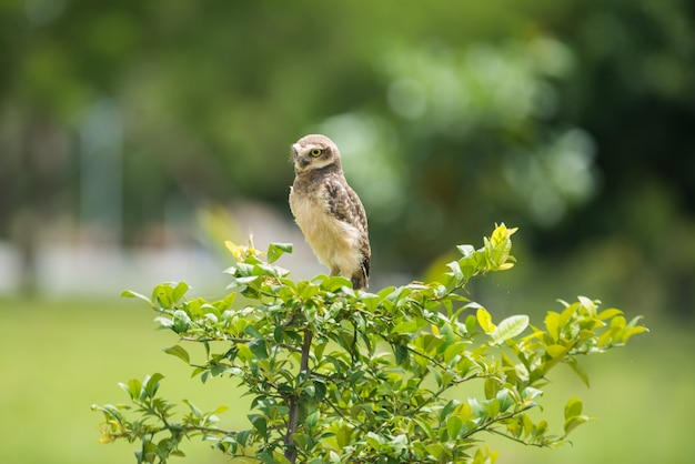 Owl on the tree looking aside Premium Photo