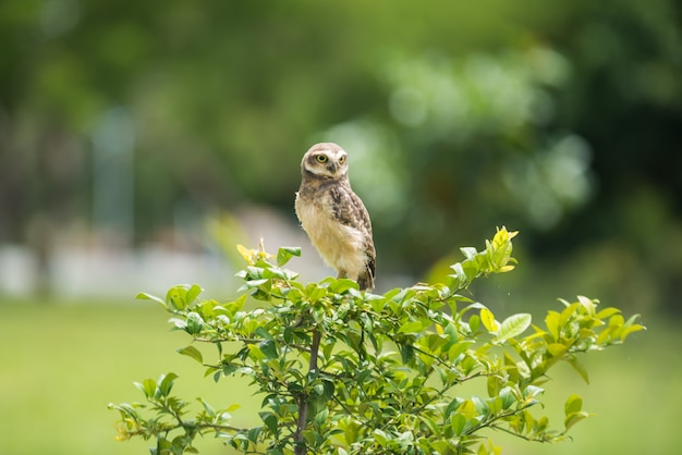 Owl on the tree looking aside