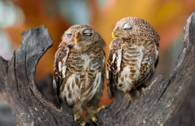 Owls big yellow eyes on green