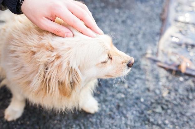 愛犬を優しく愛撫する飼い主。白い犬の頭を撫でる男性の手