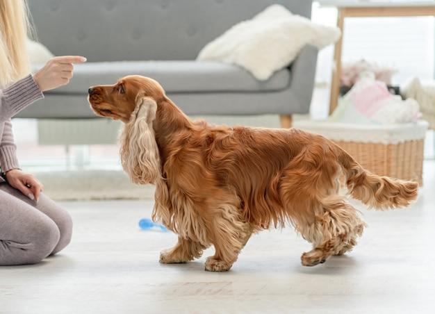 家で手のひらからイングリッシュコッカースパニエル犬に餌をやる所有者