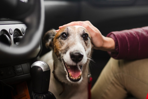 Owner petting dog in car
