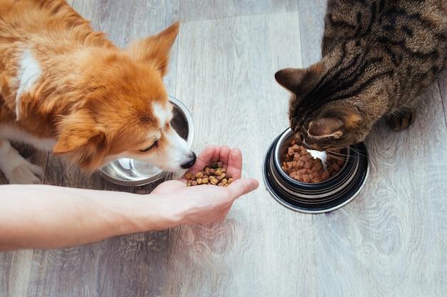 주인은 부엌에 있는 고양이와 개에게 마른 음식을 붓습니다. 마스터의 손. 확대. 동물을 위한 개념 건조 식품