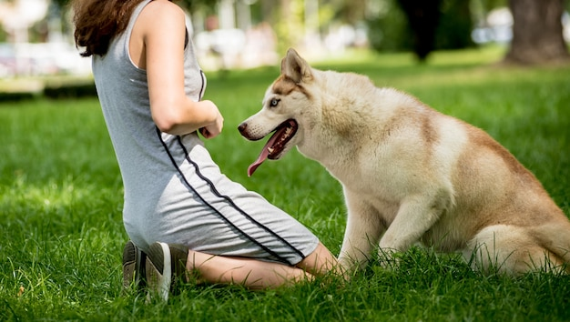 Owner trains the husky dog at the park.