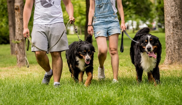 飼い主は公園でバーニーズ・セネンハンド犬を訓練します
