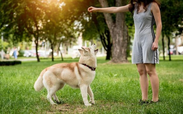 飼い主は公園でハスキー犬を訓練します。