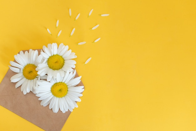 Oxeye daisies with a copy space on orange and pink