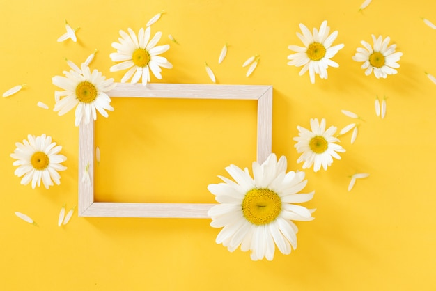 Oxeye daisies with a copy space on an yellow background
