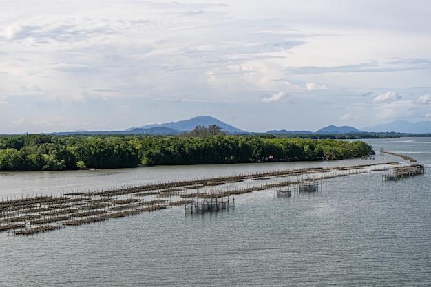 カキと貝殻養殖場