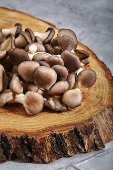 古い荒い木材のカキのキノコ。きのこ、若いきのこと新鮮な菌糸体。灰色と木製の背景、コピースペース。