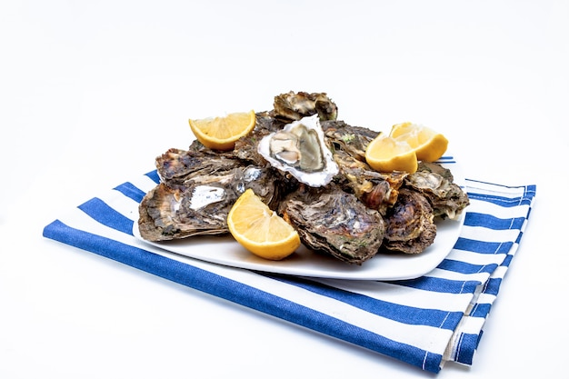 Oysters food in a plate