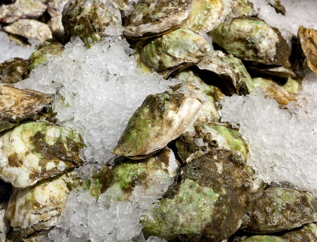 Oysters on ice for sale