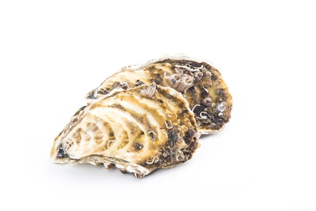 Oysters isolated on white wall
