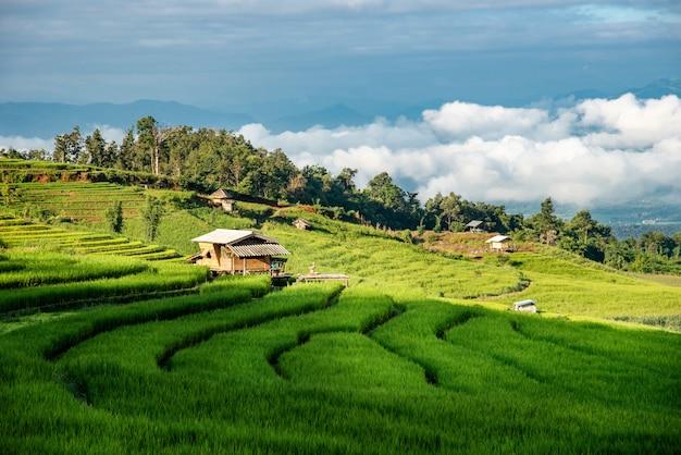 Pa bong piang rice terraces at chiang mai province, northern thailand