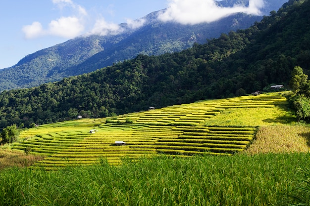 Pa pong piang rice terraces,chiang mai,mae cham, thailand