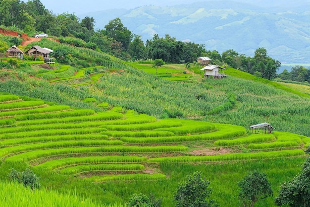 タイのチェンマイ北部にあるパポンピアン棚田。