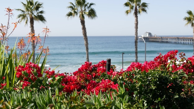 Pacific ocean beach, palm trees, flowers and pier. sunny day, tropical waterfront resort. oceanside vista viewpoint near los angeles california usa. summer sea coast aesthetic, seascape and blue sky.
