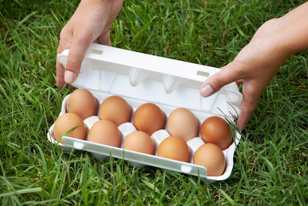 Pack of eggs on grass