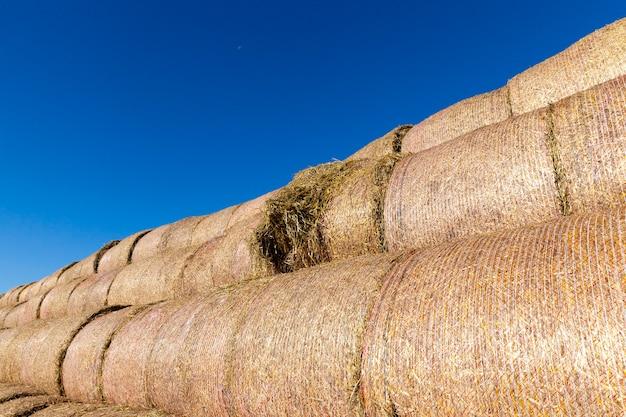 収穫後の小麦のナイロンネットストロー、青い空、一年の夏の時期にパッケージ化