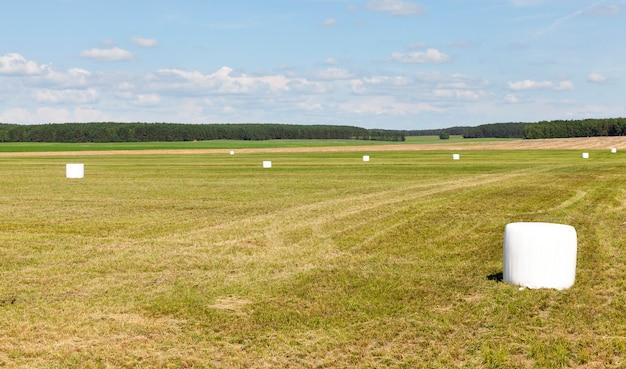 겨울에 가축에게 먹이를주기 위해 경 사진 흰색 폴리머 필름과 연약한 잔디 건초에 포장
