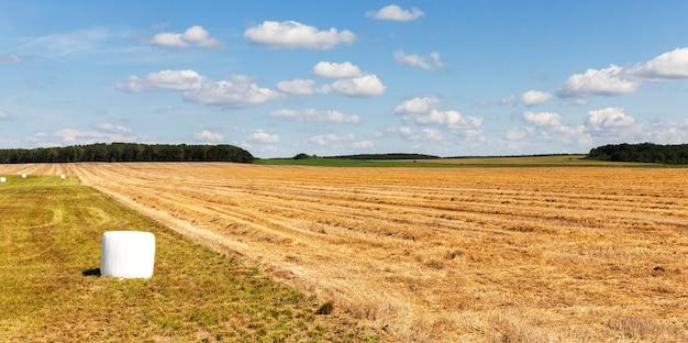 겨울, 풍경에 농장 동물에게 먹이를주기 위해 수확 된 마른 건초를 수확 한 흰색 셀로판 롤에 포장