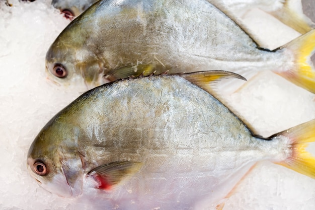 Pacu, characidae fish on ice saling in market
