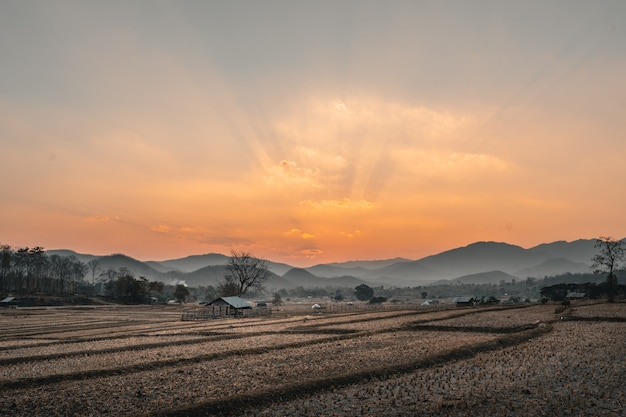 夕方の収穫後の水田と小屋