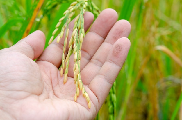 Paddy in hand, pattern background blurred.