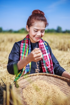 Paddy rice in farmer woman hand