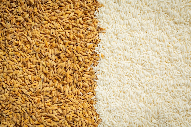 Paddy rice and white rice wallpaper details