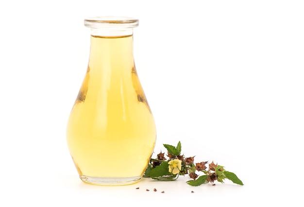 Люцерна падди или sida rhombifolia ветвь и масло, изолированные на натуральном.