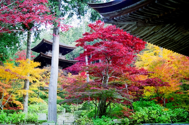 Pagoda in a japanese garden in kyoto