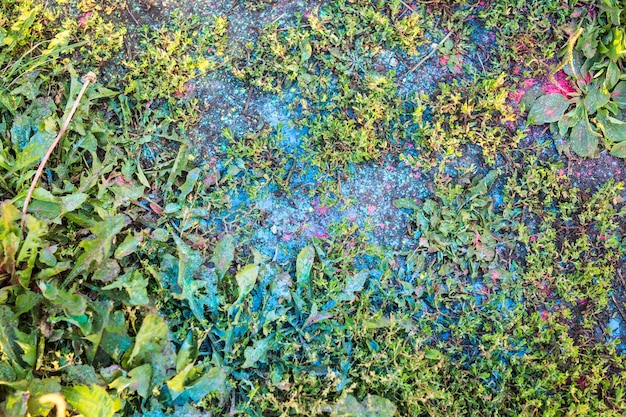 Краска разных цветов на фоне зеленой травы